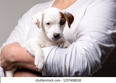 Man holds a puppy in his hands in studio