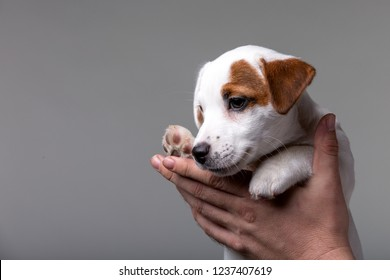 Man holds small terrier puppy in his hands in studio