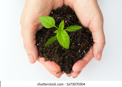 Man holds a sprout in hands on a white background