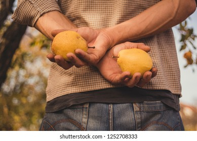 Man holds two yellow pears behind the back