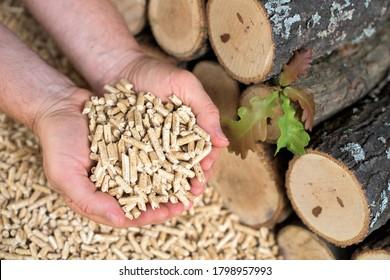 Man holds wooden pellets. Oak leaves and wood