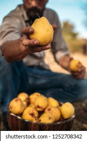 Man holds yellow pears
