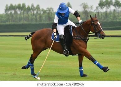 Man horse polo player use a mallet hit ball in tournament