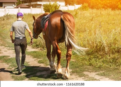 A man with a horse is walking along the road. Back view. Summer is a hot, sunny day.
