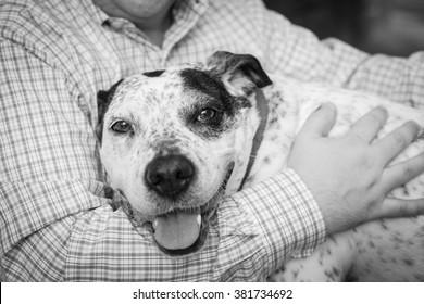 Man hugs smiling black and white dog, pointer mix