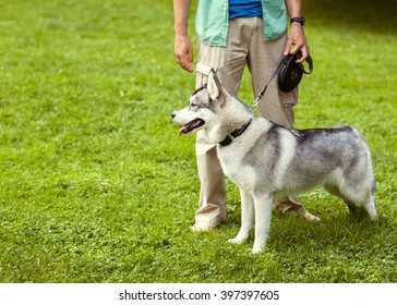 Man and Husky dog walk in the park.