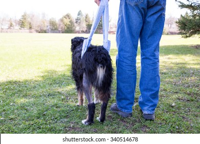 Man with injured dog contemplating the big park ahead, during a rehabilitating walk in a sling