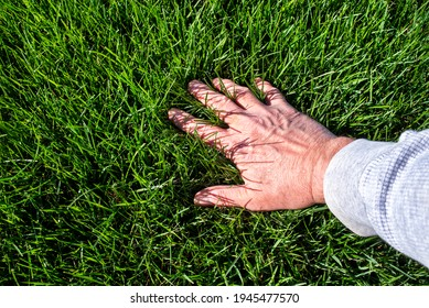 Man inspecting lush green grass lawn. Caring, care, looking, thick, outside, Sky, sunshine, care, seed, fescue, tall, watering, perfect, soil, manicured, blade, horizon line, eye level, baseball field
