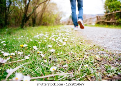 Man in jeans and sport sneakers walking along  a path in springtime. Focus on the daisies.