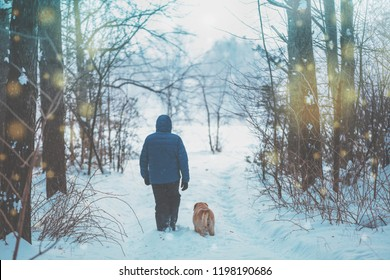 A man with a Labrador retriever dog walking in the winter forest on a snow-covered road, back to the camera