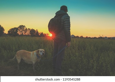 Man with Labrador retriever dog walks in the field in autumn. Man holds the dog on the leash  and gazing sunset