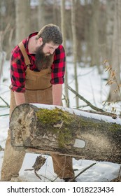 Man with a long beard dressed as a lumber jack cutting through a fallen tree with a chainsaw in the forest.