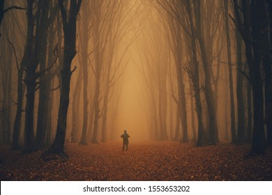 Man lost in a spooky forest. Forest in fog with mist. Fairy spooky looking woods in a misty day with a man lost in it. Cold foggy morning in horror forest