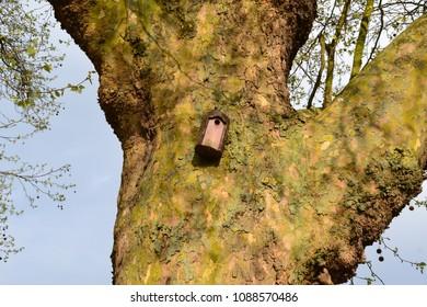man made bird nesting facility on a tree