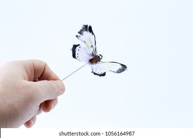 Man male Hand holding a Black and white fake artificial wired flying butterfly isolated in white background