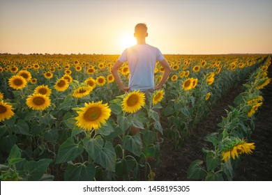 Man in meadow of sunflower at sunset. Nature and conceptual composition.