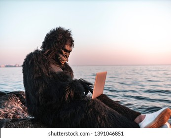 A man in a monkey costume at sunset near the sea works on a computer. Animal programmer does the work