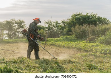 A man mows the grass in the garden with a trimmer.