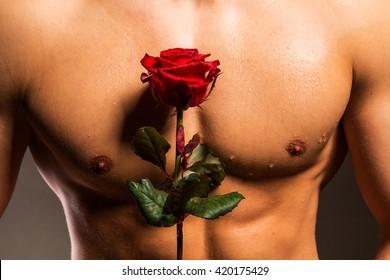 Man with muscular torso holding rose - studio shot