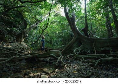 Man and nature, huge looking-glass tree and mangroves in dense tropical rainforest jungle