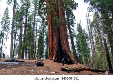 Man next to a giant sequoia at Sequoia National Park, United States