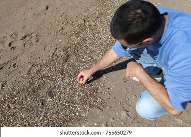 Man on the beach picking shells from the sand.
