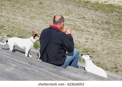 Man on a bench eating soup and two dogs watching on him