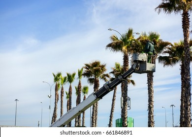 The man on the crane cuts off palm trees