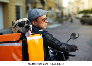 Man on motorbike with the dog inside special thermo bag for delivery food on the street.Food delivery service.