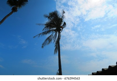 Man on top of a coconut tree (Thailand)