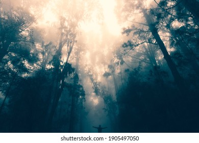 Man with open arms in mysterious foggy forest in Tenerife. Canary Islands.