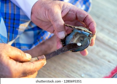 A man opening oysters and extracting pearls from them, Cultural Quarter Katara, Doha, Qatar, November 16, 2017
