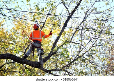 Man in orange work wear cutting tree branches over the wires on the height. Part of a series.