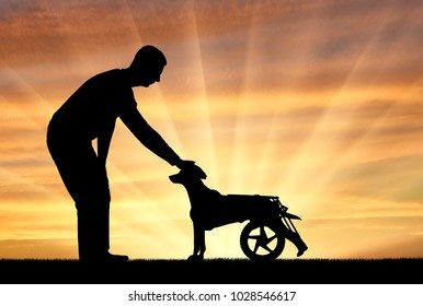 Man outdoors strokes his paralyzed dog in a wheelchair. The concept of helping pets