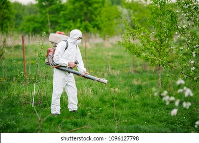 Man in the overalls treats apple tree chemicals from harmful insects. Gardening and people concept.