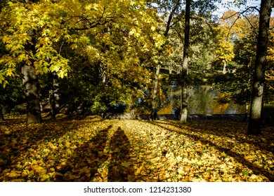 A man photographs a woman at the tree. Autumn Park. Young couple walking on the foliage. The girl looks at the river.