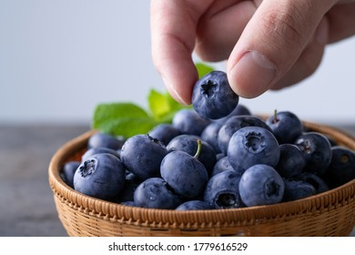 Man pick fresh ripe blueberries.