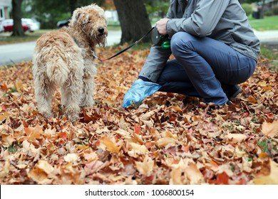 Man  Picking up / cleaning up dog droppings