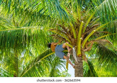 Man picking up coconuts