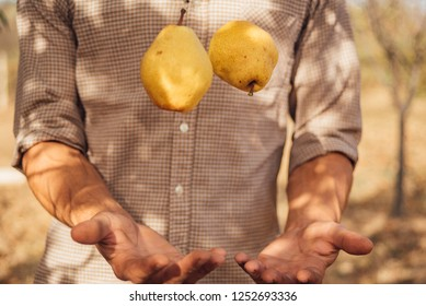Man in a plaid shirt throws two yellow pears