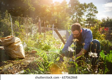 man planting crops in communal garden shot with lens flare