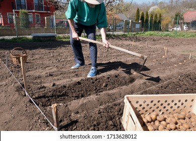 Man planting potatoes in the garden