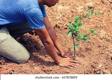 A man planting tree in the garden for growth to the future time.