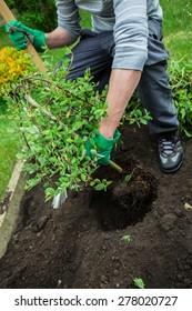 a man plants a tree