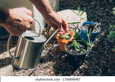 A man plants and watering plants in a backyard.