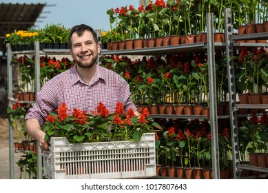 Man with plastic box of flowers loads production on cart for selling