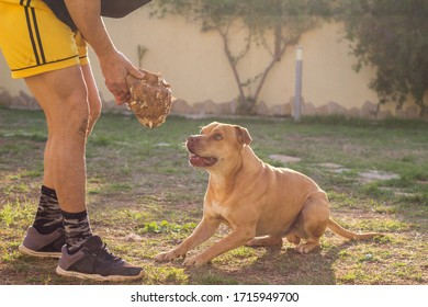 Man playing with dog in back yard outdoors