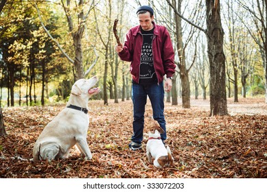 man playing with dogs in park. Caucasian man walking with dogs in autumn park