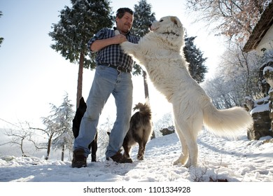 man playing with giant dog