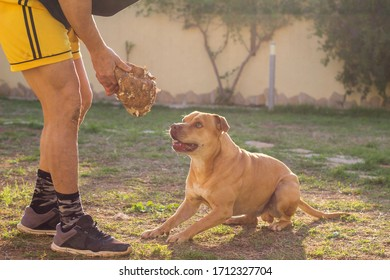 Man playing with his dog in garden